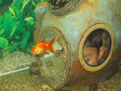 en underlig fisk